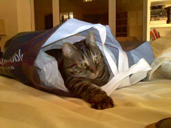cat-in-bag